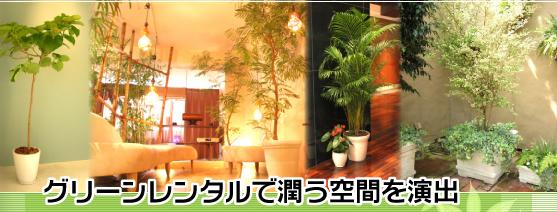 グリーンディスプレイ グリーンレンタル 観葉植物 レンタル 観葉植物リース観葉植物 販売 東京23区