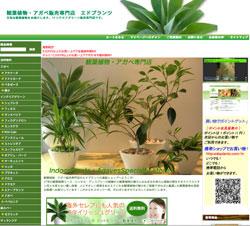 観葉植物アガベ販売専門店エドプランツ