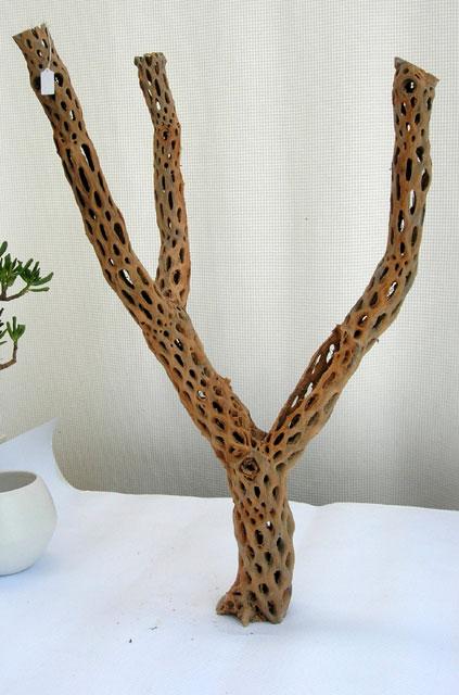 ストレリチア・バルビフォールビアスプーンリーフ 観葉植物レンタル ディスプレイ