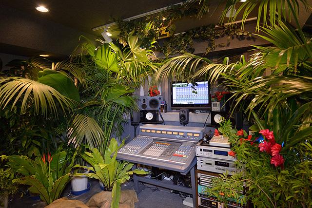 観葉植物レンタル グリーンレンタル 室内演出 ジャングル