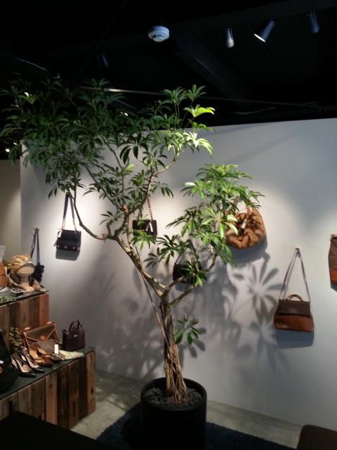 観葉植物レンタル グリーンレンタル 室内演出