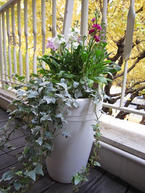 戸外 フワラーディスプレイ 植物レンタル リース