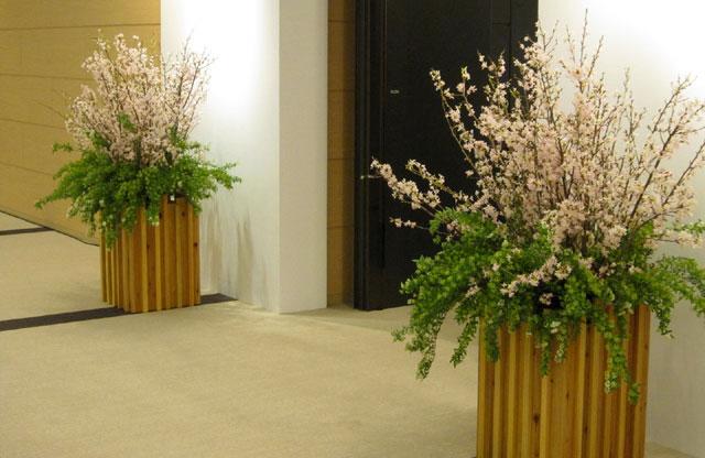魅力的な観葉植物 展示会 販売 自然な雰囲気 グリーン レンタル ディスプレイ