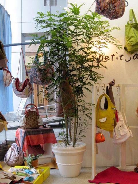 魅力的な観葉植物 展示会 販売 季節のイメージ グリーンレンタル